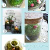 Tuesday Tutorial: Terrariums!