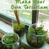 Guest Blog: Make a Terrarium by Amy the intern