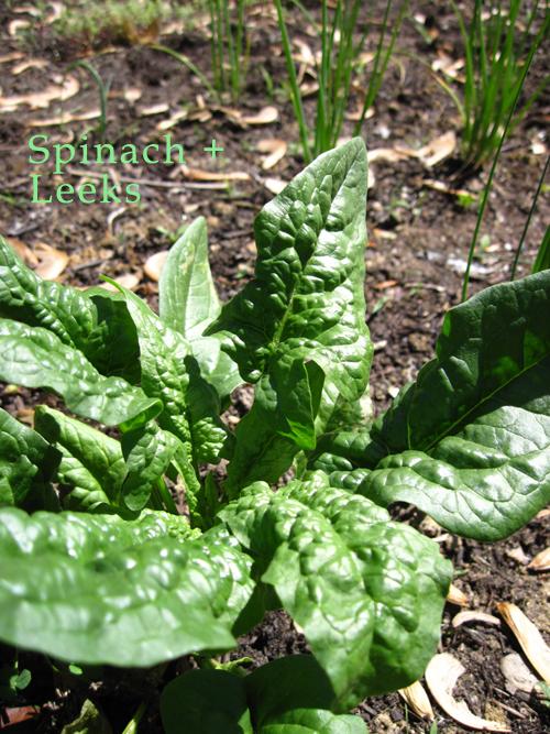 spinachleeks.jpg