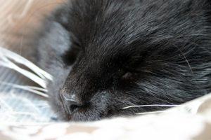cat in elizabethan collar