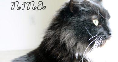 kitty cat nina