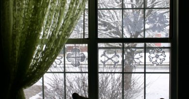 snow and papersnowflakes