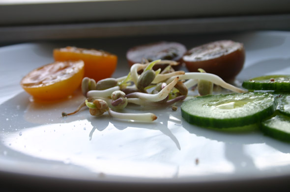 how to eat local in the middle of winter? sprouting!