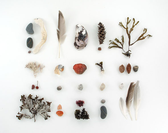 beachcombing collection