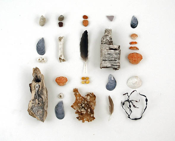 beachcombing collection- shells, feathers